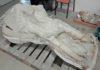 French Farmer Discovered a Rare Mastodon Skull, But Kept It Secret for Years