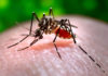 Thailand is experiencing its largest dengue epidemic in more than two decades