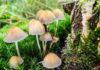 These Psychedelic Drugs Show Promise for Treating Mental Health Disorders
