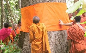 Why are trees being ordained as monks in Thailand?