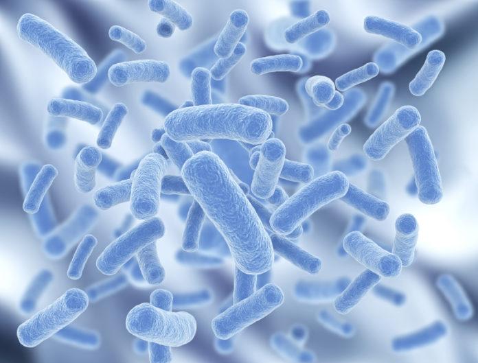 humanprobioticsbacteria