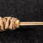 Prickly Pear Cactus Needles Are Oldest Tattoo Tool in Western North America