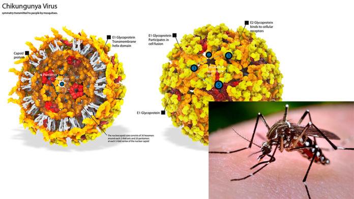 chikungunya virus