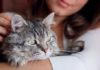 Here's the Best Way to Pet a Cat, According to Science
