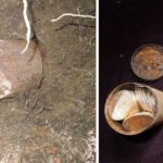 Couple finds rusty can with $ 10 million in gold coins