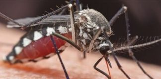 People v mosquitos: what to do about our biggest killer