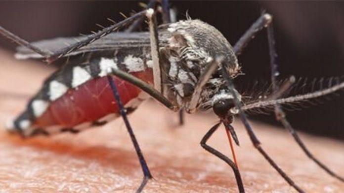 Mosquito-EEE