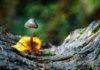 'Trippy' Bacteria Engineered to Brew 'Magic Mushroom' Hallucinogen