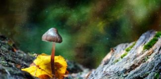 'Trippy' Bacteria Engineered to Brew 'Magic Mushroom' Hallucinogen