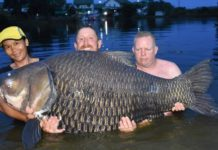 British Fisherman Reels in World's Largest Carp in Mae Klong River in Thailand