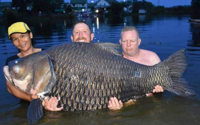carp thailand