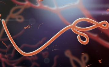 Japan Just Imported Ebola to Prep for Possible Olympic Outbreak