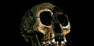 Why Humans' Extinct 'Hobbit' Relatives Were So Small