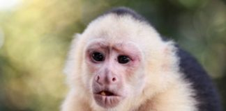 Game Over: These Monkeys Just Crushed Humans on a Computer Game