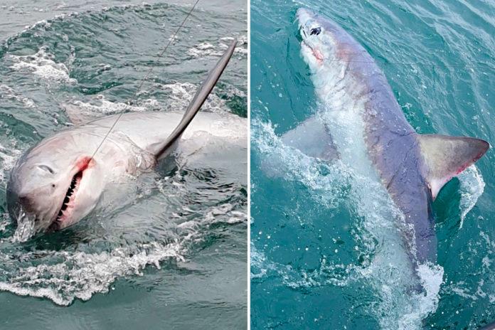 catch-shark